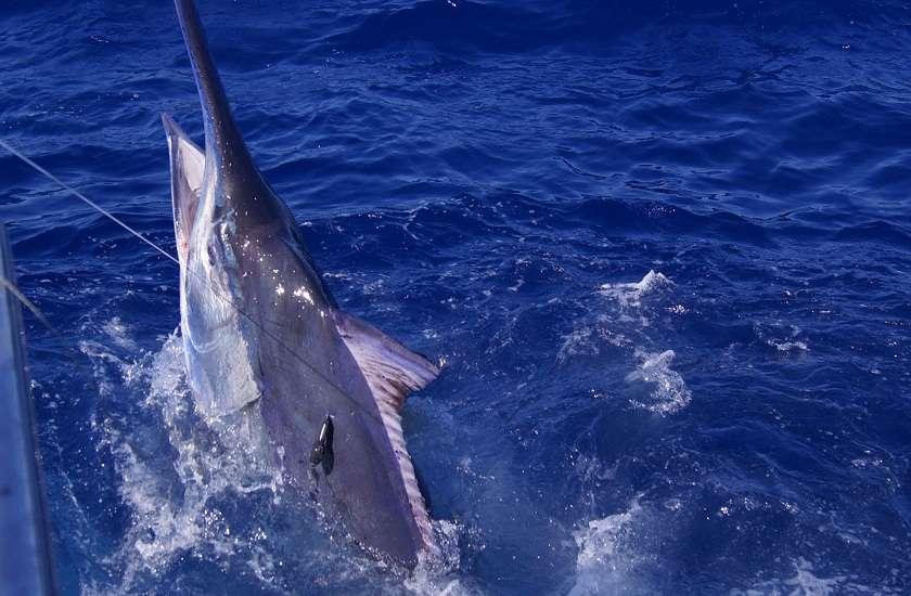 इस चीज की तलाश में प्रशांत महासागर से आया 185 किलो का जीव, विशेषज्ञ ने कही ये बात
