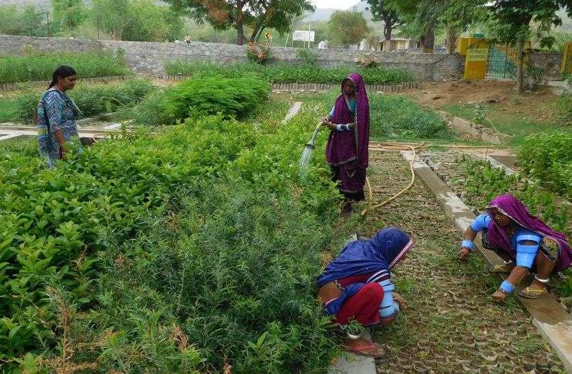 पौने तीन लाख पौधों से लहलहा रही वन विभाग की नर्सरी