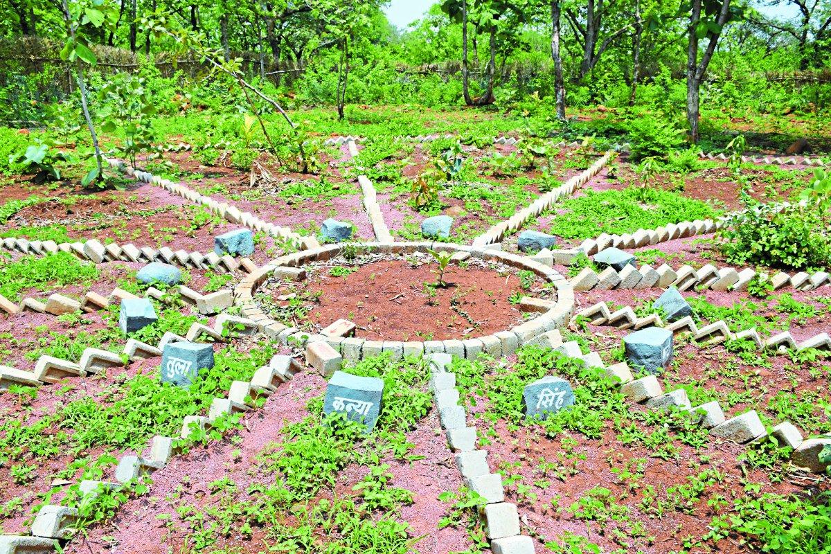 घरों में तैयार की जा सकती है पोषण गृह वाटिका