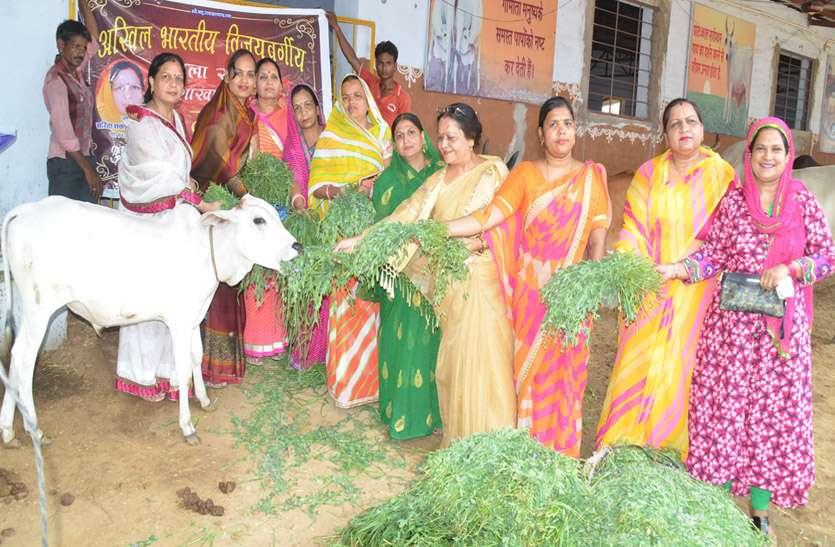 महिलाओं ने दिखाई दरियादिली, गांधी गोशाला में खिलाया गायों को चारा