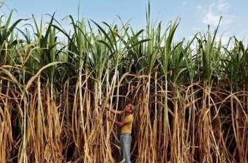 किसानों को होगा फायदा, मोदी सरकार ने बढ़ाया 20 रुपये प्रति क्विंटल गन्ने का मूल्य