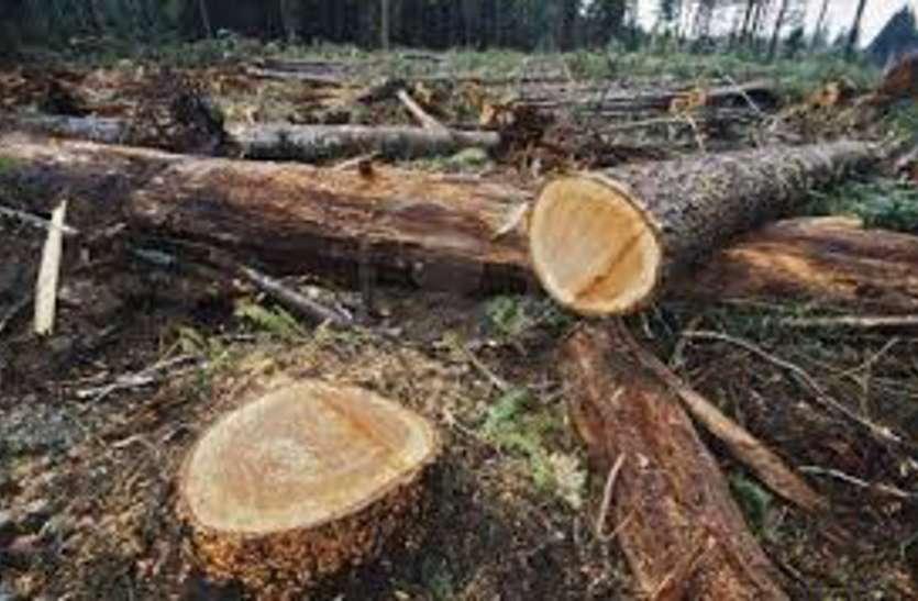 बस्तर में सिमटते जंगल
