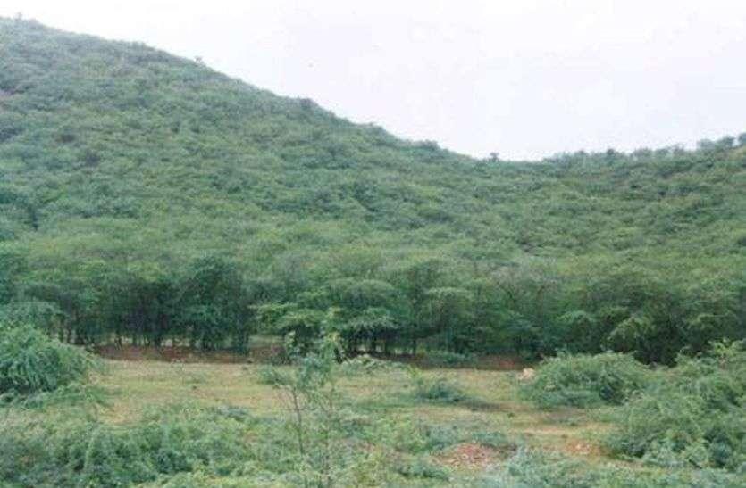 अलवर में काटे जाएंगे 4 हजार पेड़, ऑक्सीजन की होगी भारी कमी