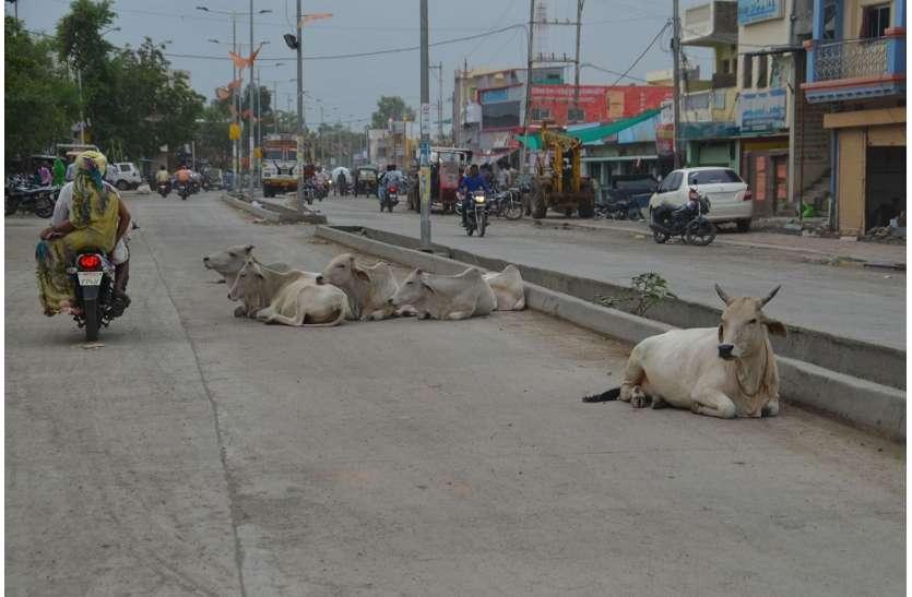 सड़कों पर चलते हुए गोमाता देती है आर्शिवाद, फिर होती है दुर्घटनाएं
