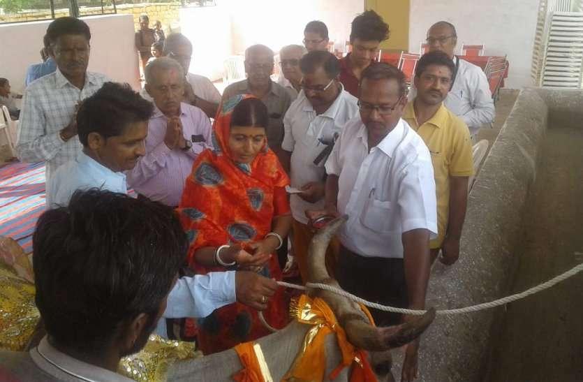 कन्हैया गोशाला में पंचगव्य चिकित्सा से हुआ इलाज