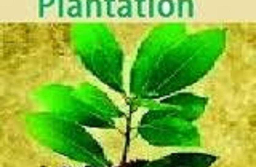 पिछले वर्ष किए गए पौध रोपण की गेप फिलिंग भरेगा जिला पंचायत, लगाए गए थे तीन लाख पौधे