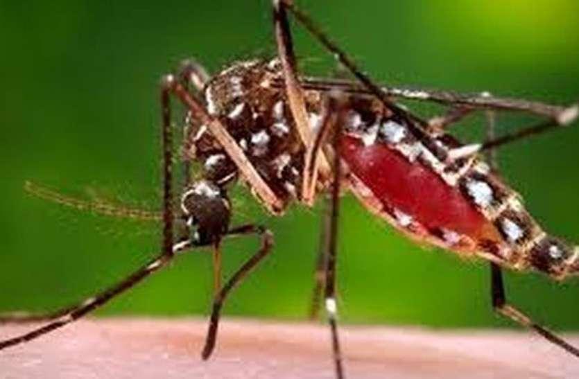 डेंगू की जांच को लेकर चिकित्सक एकमत नहीं