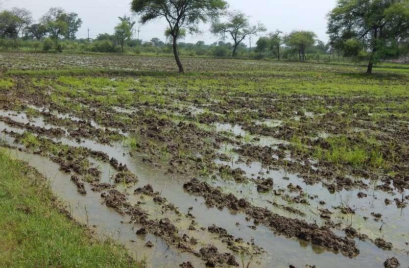 किसान खेतों की ओर रुख करने लगे धान के रोपा लगाने के काम आई तेजी