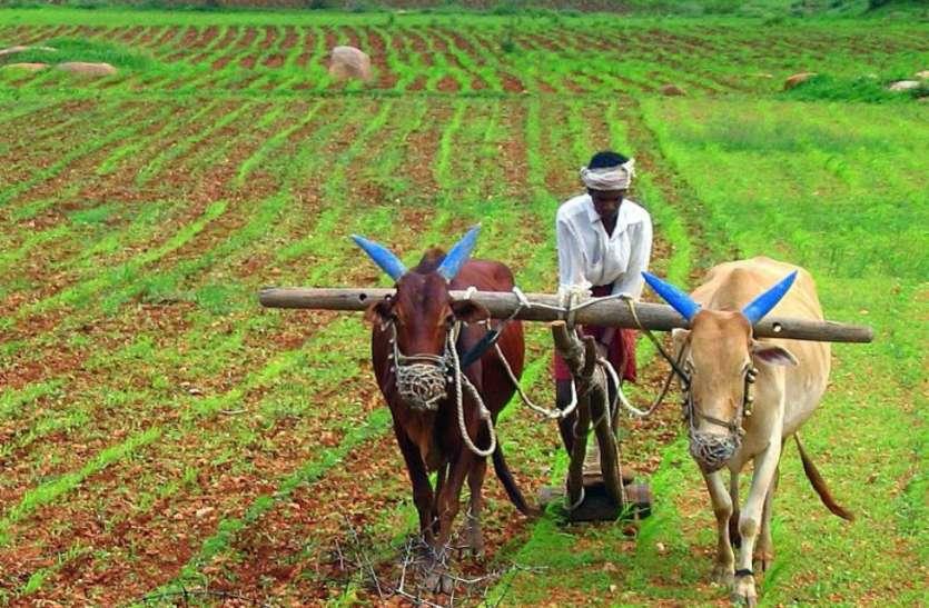 44 हजार किसानों को 523 करोड़ का भुगतान