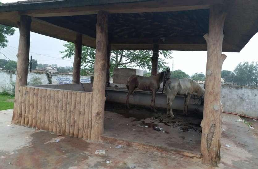 पन्ना के इस पर्यटन स्थल पर बांध रहे घोड़े, नपा की  लापरवाही उजागर