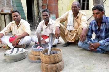 सिटी पैलेस और आमेर में कोबरा से खेल, चार गिरफ्तार