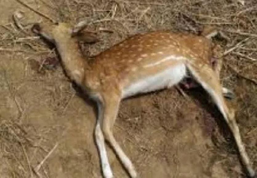 आवारा श्वानों का झुंड खेत-खलिहानों में घूमता रहता है, जब भी मिलें हिरण, ये पेट फाड़कर खा जाते हैं उन्हें