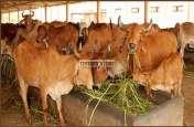 21 डॉक्टर , 62 सहायक पशु चिकित्सा अधिकारियों की टीम कर रही मौज