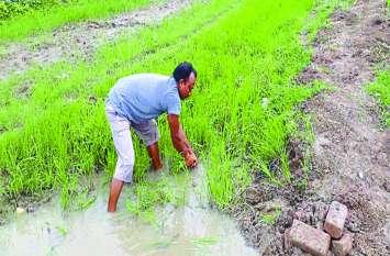 खेतों की स्थिति ऐसी की पानी के अभाव में मुरझाने लगी फसलें , किसानों को हो रही परेशानी