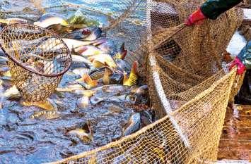 मछली पकड़ने गए भाइयों के जाल में फंस गई ऐसी चीज, बाजार ले जाते ही बदल गई किस्मत