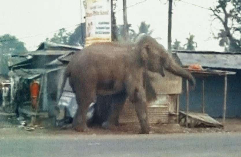 इस गांव में हाथियों का झुंड पहुंचने से दहशत में ग्रामीण, इस विभाग पर लगाया गंभीर लापरवाही का आरोप