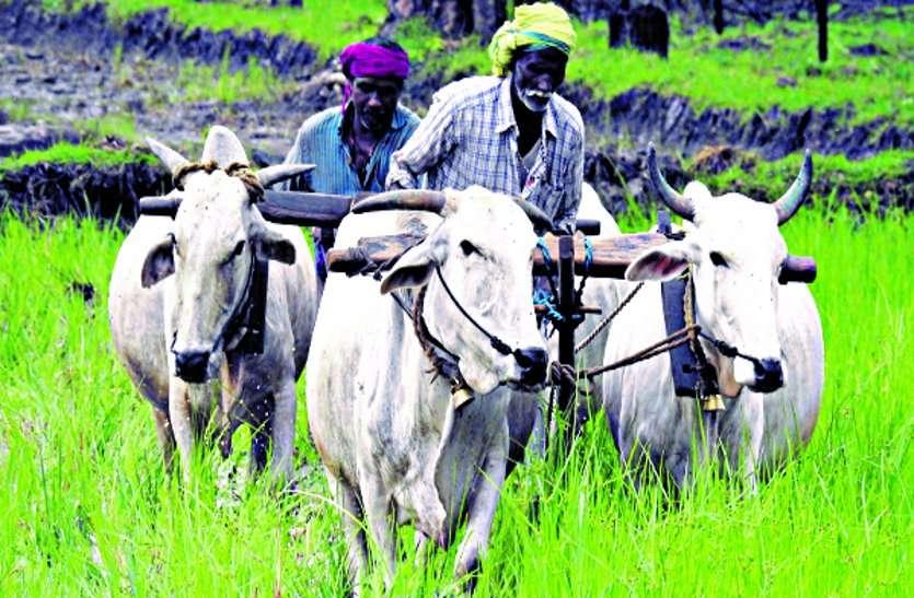 मानसून ने तोड़ की किसानों की उम्मीदें