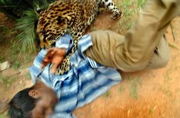झाडिय़ों से निकलकर अचानक युवक पर झपटा तेंदुआ, इस तरह बची जान, देखें लाइव वीडियो
