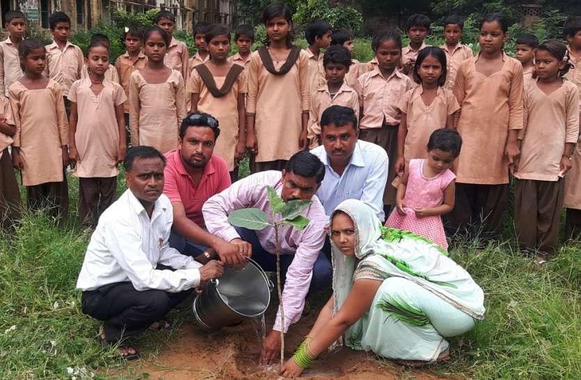 पौधे ही प्रकृति का श्रृंगार, हरियालो राजस्थान के तहत पौधारोपण