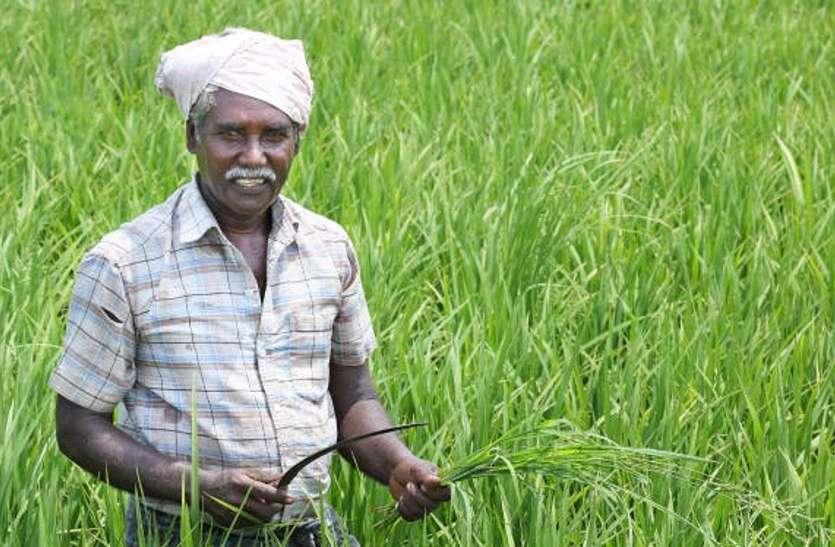 बरसात से दमके किसानों के चेहरे