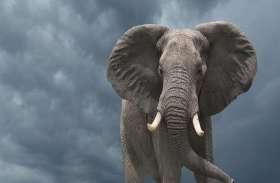 हाथी को कैंसर का खतरा कम क्यों?