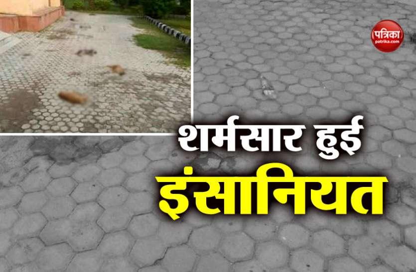 दिल्ली: इंसानियत हुई शर्मसार, अज्ञात शख्स ने डॉग के 7 बच्चों की निर्ममता से की हत्या