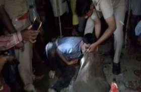 VIDEO पुलिस ने आरोपी के मुंह से उठवाया प्रतिबंधित पशुओं का मांस, डीजीपी तक पहुंचा वीडियो