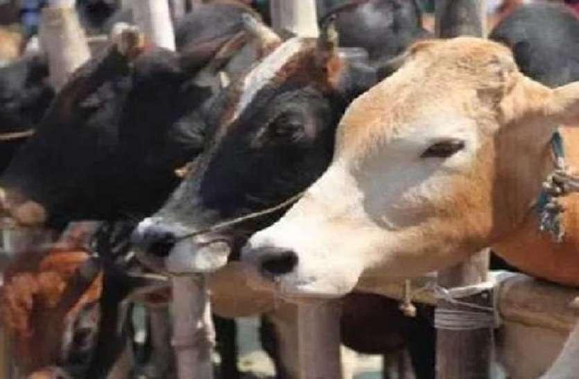 यूपी के जौनपुर में मुसलमानों ने 17 गोवंश की कुर्बानी होने से बचाया