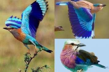 सावन में नीलकंठ की खूबसूरत तस्वीरें  देख आप भी कह उठेंगे  वाह