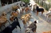यूपी के इस शहर में कुत्तों के कान काटकर उन्हें खिलाया जा रहा दूध-ब्रेड और चिकेन