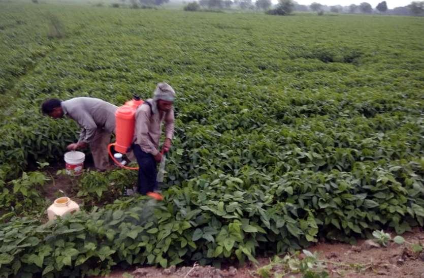 मंडियों में पहुंच रही बाजरे की फसल ,लेकिन  शुरू नहीं हुई खरीद