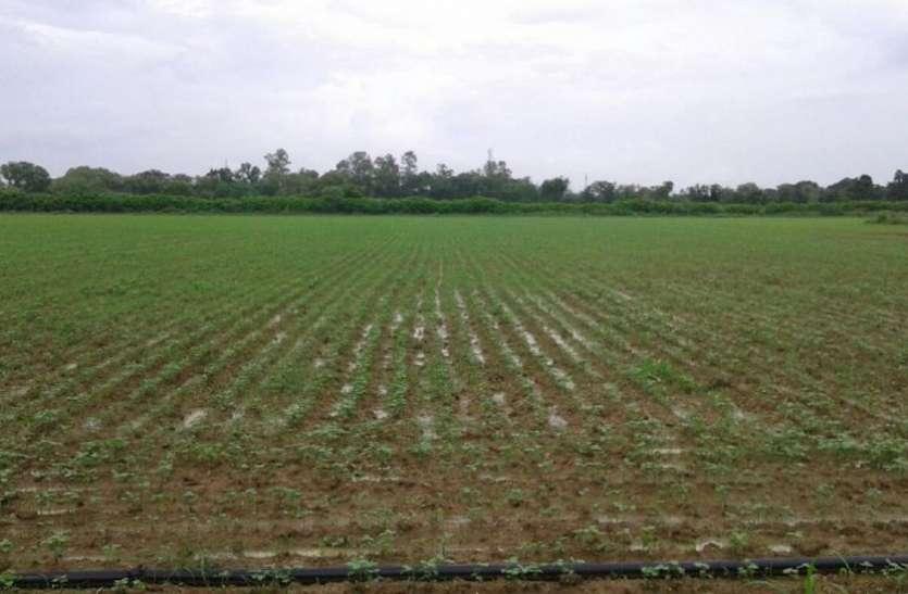 मौसम की बेरुखी, किसानों पर बरपा कहर, एमपी के इस जिले में बुरे हैं हालात