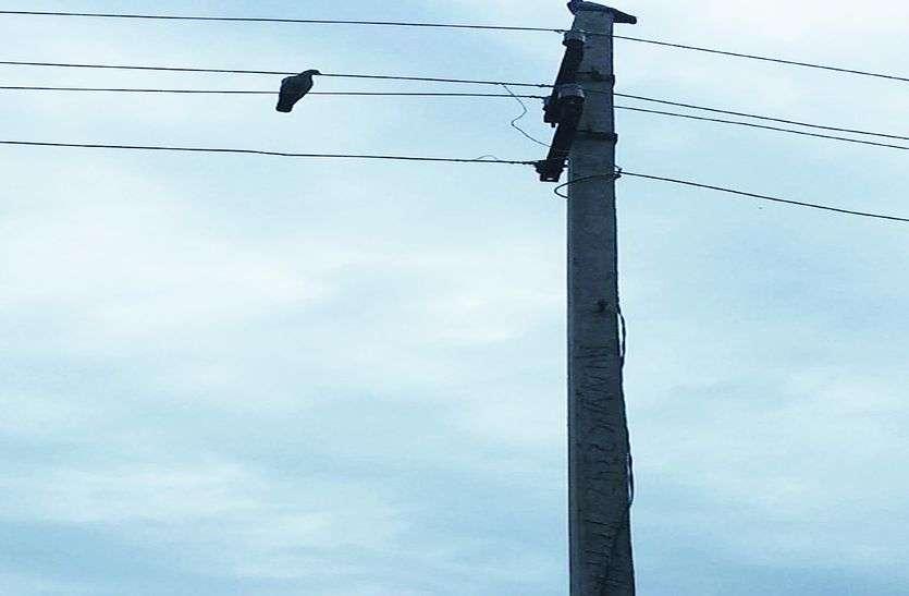खुलेआम बिजली चोरी, अब कनेक्शन की तैयारी