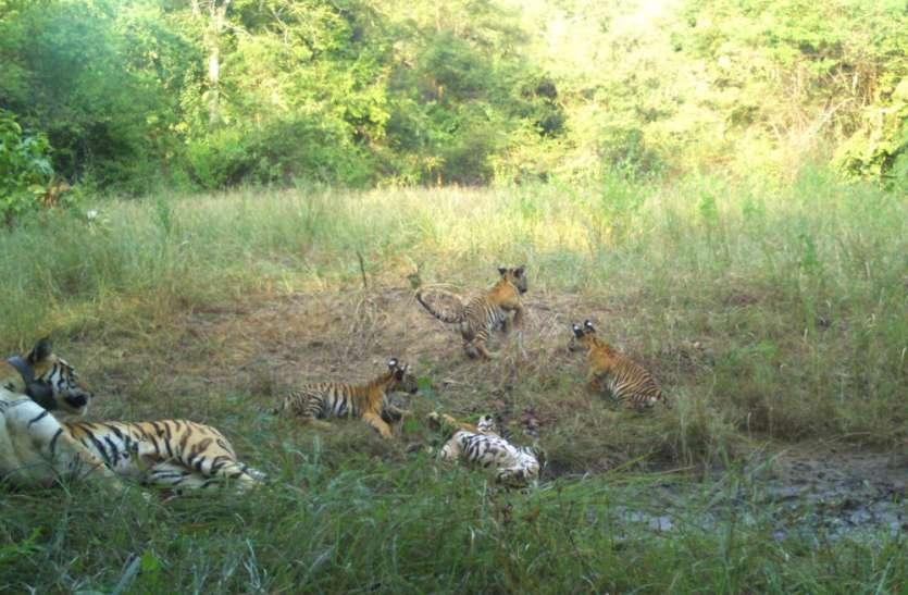 टाइगर रिजर्व के बफर जोन में भी वॉच टॉवर बनाकर बाघों की करेंगे निगरानी