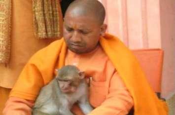 VIDEO क्या आपको पता है योगी की गोद में बैठे इस बंदर की कहानी? सुनिए सीएम योगी की जुबानी