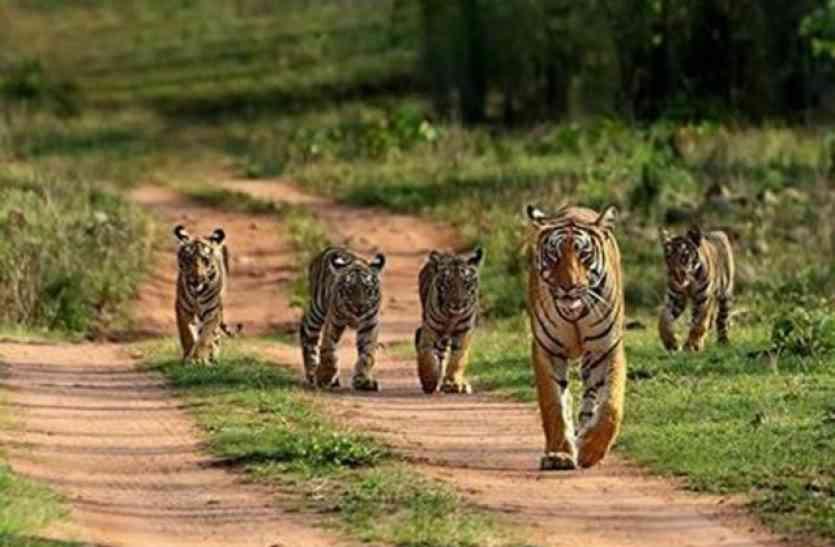 एक अक्टूबर से मनाया जाएगा वन्य-प्राणी संरक्षण सप्ताह , स्कूली बच्चों के साथ साझा करेंगें  अनुभव
