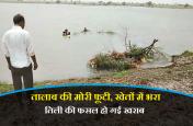 तालाब की मोरी फूटी, खेतों में भरा पानी, तिली की फसल हो गई खराब, देखें वीडियो