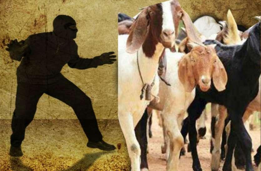 पशुपालक को चाकू मारकर 17 भेड़ बकरी ले भागे बदमाश
