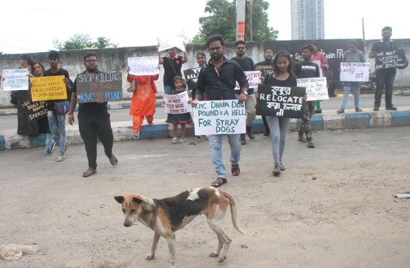 स्ट्रीट डॉग प्रेमियों ने निगम के खिलाफ किया प्रदर्शन
