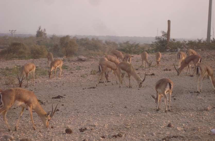 सिमटते जंगल वन्यजीवों के अस्तित्व पर खतरा