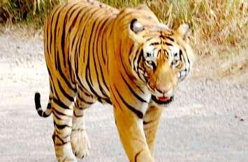 सरिस्का में कैमरे बन रहे बाघ का पता लगाने के सारथी