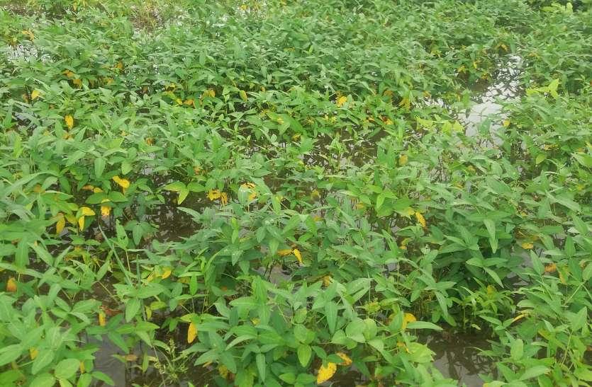 खेत बने तालाब, ऐसा हो रहा फसलों का हाल