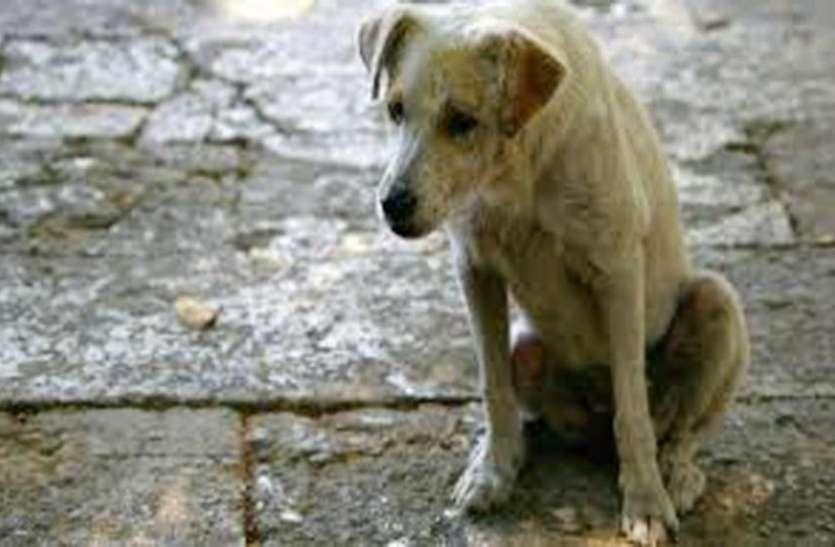 नशे में धुत युवक ने कुत्ते के साथ किया ऐसा खौफनाक काम, देख रहे लोगों ने फिर किया ऐसा काम