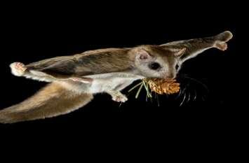 आदिवासी तस्करी और टोने-टोटके में करते है इन वन्य प्राणियों का इस्तेमाल