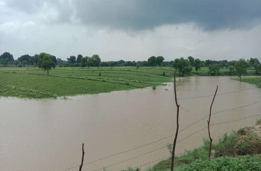 बादलों की रहमत इन फसलों के लिए पड़ रही भारी, अन्नदाताओं में छाई निराशा