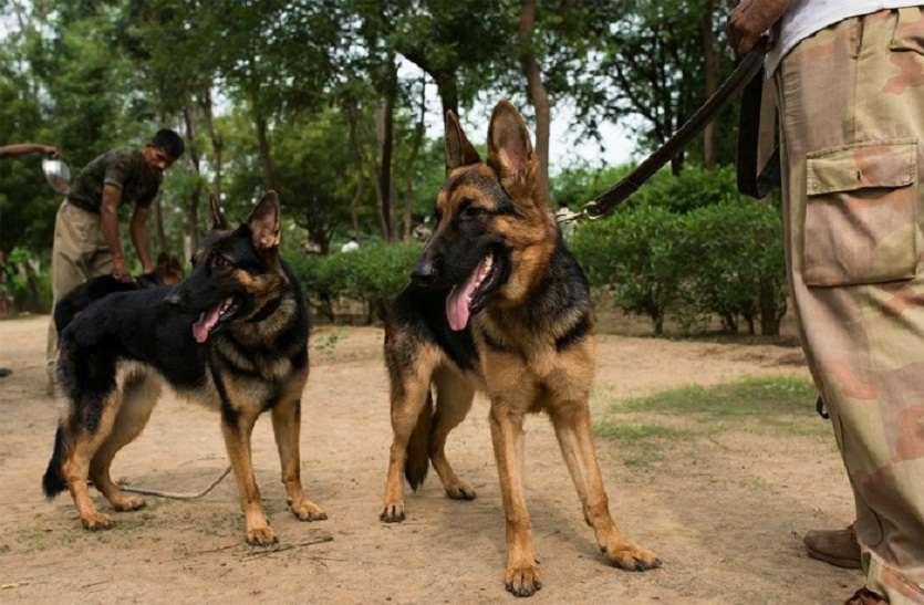पुलिस के खोजी कुत्तों से लुटेरों में भय -लौटा गए 16 लाख रुपए का सोना