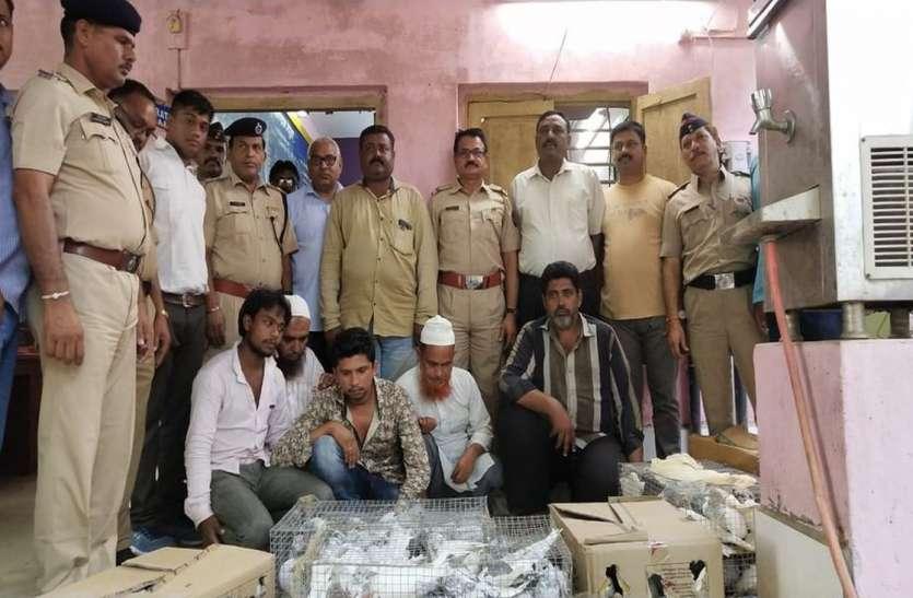 ताप्ती गंगा एक्सप्रेस से पांच जनों को चार सौ कबूतर के साथ पकड़ा