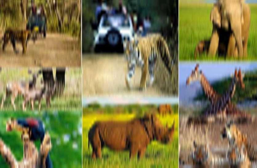 वन्य प्राणियों पर संकट
