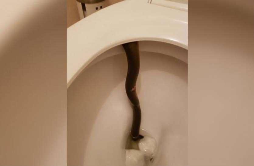 बाथरूम में घुसते ही दिखा एेजा नजारा, निकल पड़ी महिला की चीख, जानें क्या दिखा एेसा