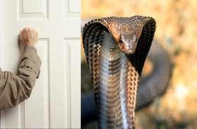 कोबरा के डसने से हुई थी मौत, 40 साल बाद दरवाज़े हुई दस्तक और फिर...